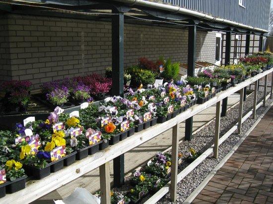 Pendre Garden & Craft Centre: Fantastic colour