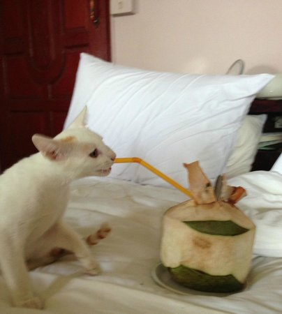 Paradise Cove Hotel: Little KO, My Surrogate Kitten During My Stay... Loves Coconuts as much as I do! ;-)