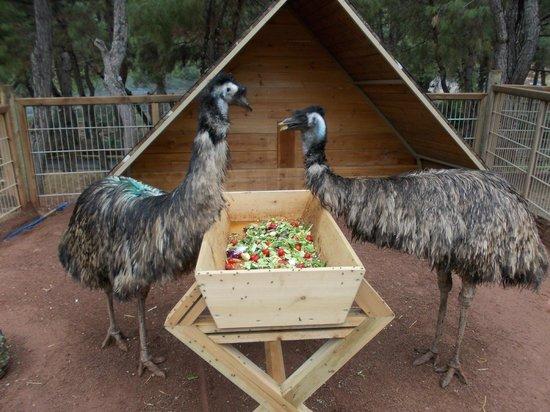 Antalya Zoo - Antalya Hayvanat Bahçesi, Antalya Resmi ...