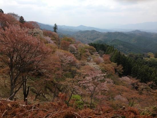Nara Prefecture, Japón: 上千本辺り