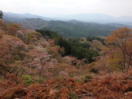 Yoshino: 上千本から見下ろした景色です