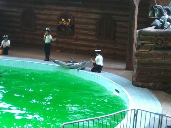 Indonesia Safari Park Cisarua: Dolphin show
