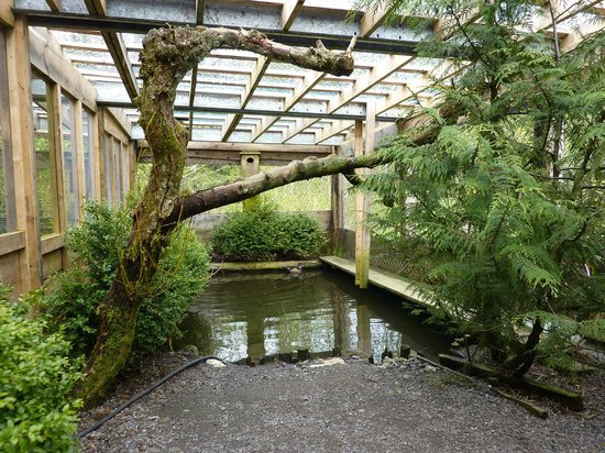 Prince Rupert Wildlife Rehab Shelter: The duck pond
