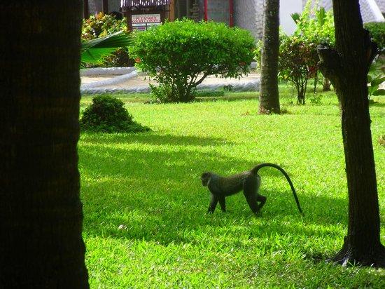 Southern Palms Beach Resort: Neighbours!!