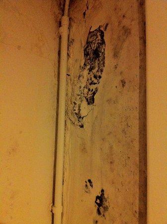 Brussels Louise Hostel: Champignons du mur