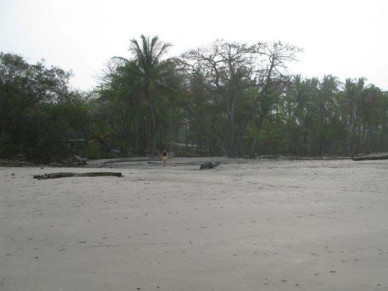Hotel Tropico Latino: Beach