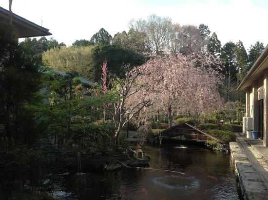 Inokura Onsen: garden