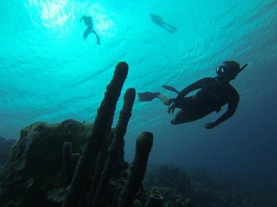Deepsea Freediving