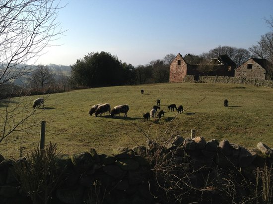 Rock House Farm Holiday Cottages: View from the garden