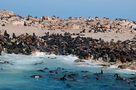 Dyer Island Φωτογραφία