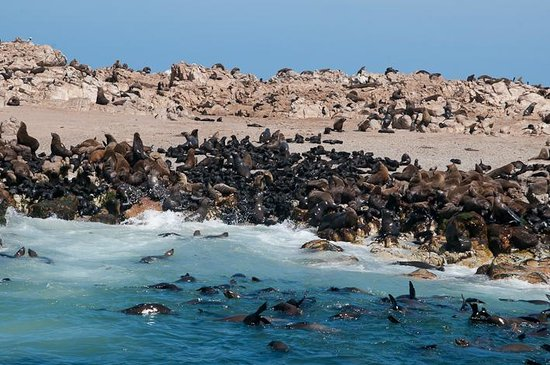 Dyer Island Photo