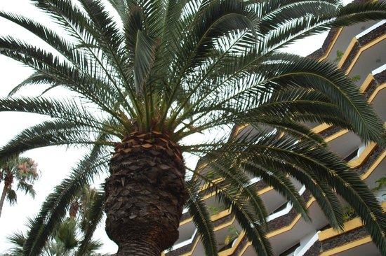 Hotasa Puerto Resort Canarife Palace: Tropikalna roślinność otaczająca hotel