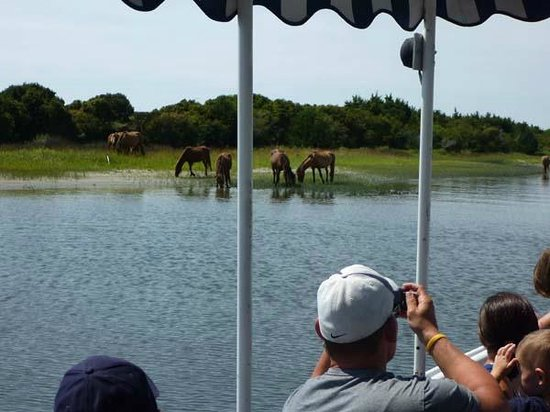 Everybody of all ages will enjoy the narrated cruise of history and wildlife on Waterbug Tours.