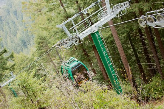 Trees of Mystery: the cable car, one car per party even if one person