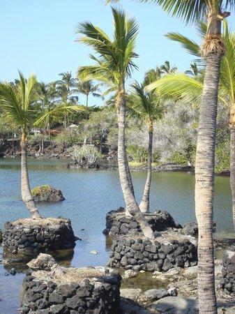 Mauna Lani Bay Hotel & Bungalows: Fish ponds