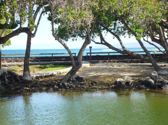 Mauna Lani Bay Hotel & Bungalows: Fishponds