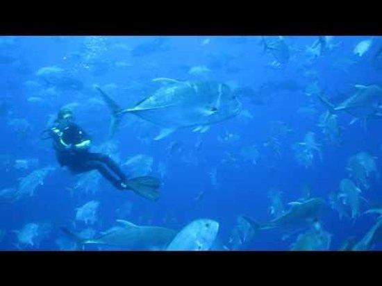 Aquasharm Diving Foto