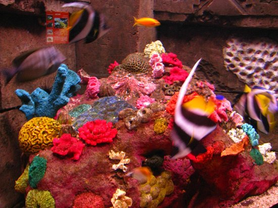 Dingle Oceanworld: Colorful fish
