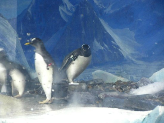 Dingle Oceanworld: Penguins