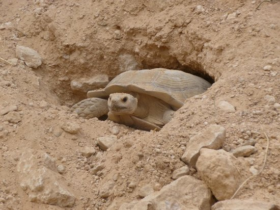 Krokodilfarm Animalia: Tortues géantes