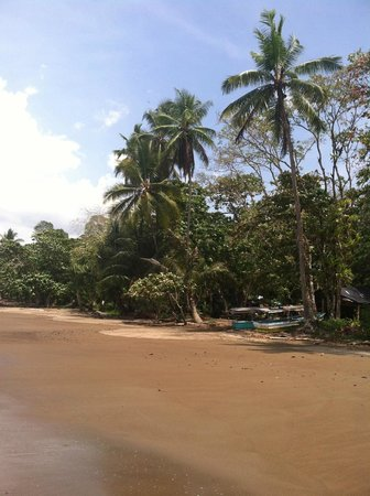 Drake Bay Wilderness Resort: Beach Walks