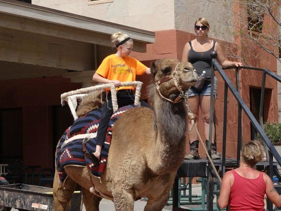 Tuacahn Amphitheatre: Camel Ride at Tuacahn Saturday Market