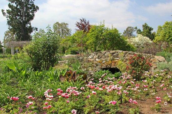 Shakespeare Garden - Picture of The Huntington Desert Garden, San ...