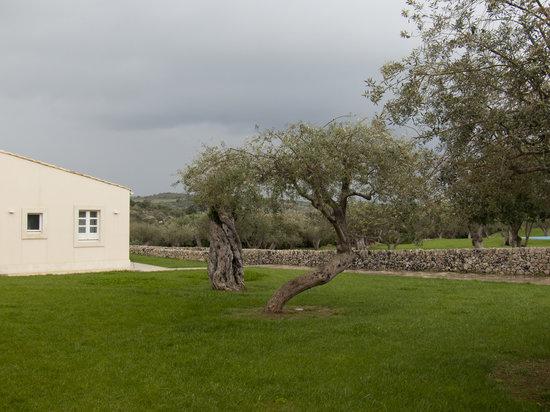 Masseria degli Ulivi: Wiese vor Bungalow