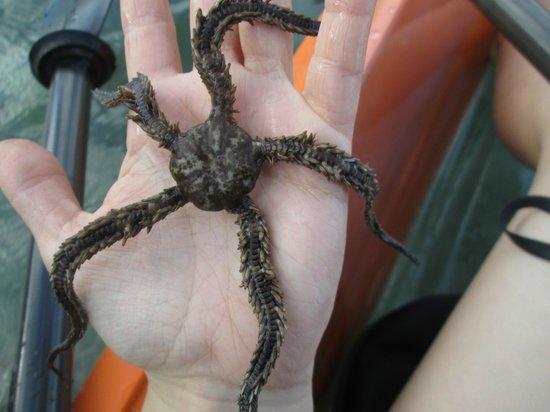 Sea Thru Kayaks VI: A star fish Bryce found for us!