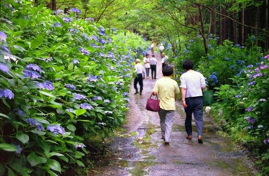 Michinoku Hydrangea Garden