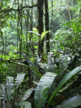 Canopy Lodge adjacent Cloud Forest & A New Year party at Canopy Lodge - Picture of Canopy Lodge El ...