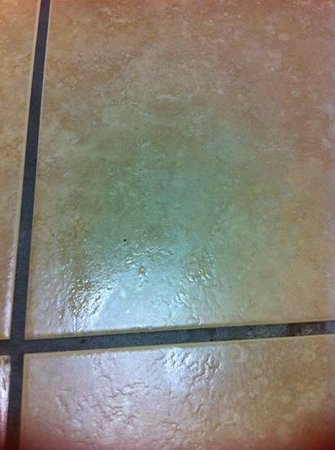 Econo Lodge Inn & Suites: spots on the floor in front of toilet