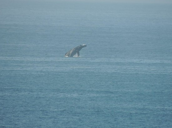 Welk Resorts Sirena Del Mar: Whales from our balcony!