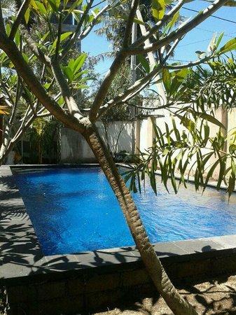 Aaliku Bungalows: Aaliku Pool (3.5m x 8m)