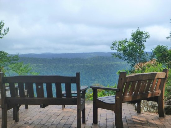 Binna Burra Mountain Lodge: Mountain view from Binna Burra grounds