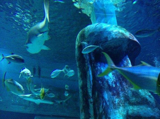 Shark Picture Of Sea Life London Aquarium London