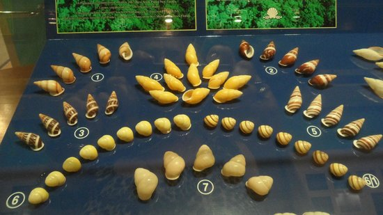 Phuket Seashell Museum: More shells