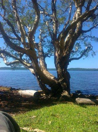 Eumarella Shores Noosa Lake Retreat: The water