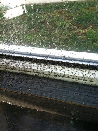 Comfort Suites Bypass: Swarms of bugs surrounding the hot tub.