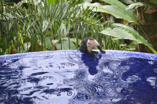 El Paseo del Mar: Capuchin by the pool