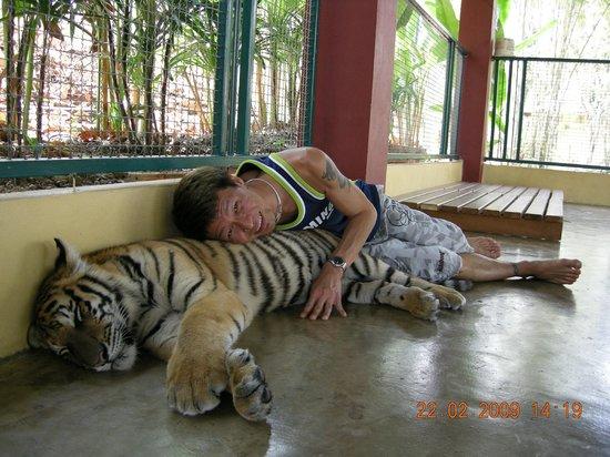 Fellowship Travel - Day Tour: Tiger Kingdom, Mae Rim