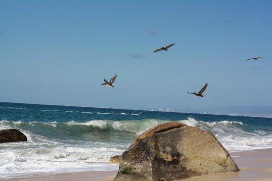 Xinalani Retreat: Private Beach