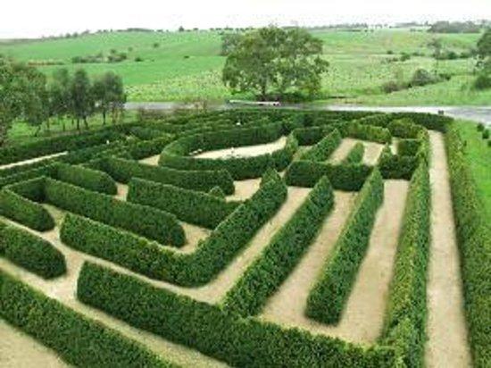 Mintaro Maze