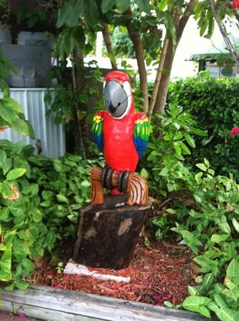 Gulfcoast Inn Naples: Welcome Parrot