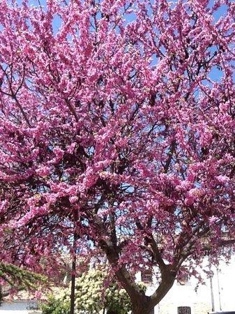 Hotel Nueve Leyendas: spring time