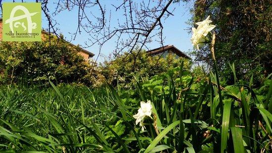 Agriturismo Villa Buontempo: Parco