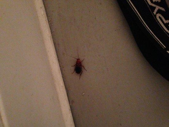 Marfa, تكساس: Bug 3