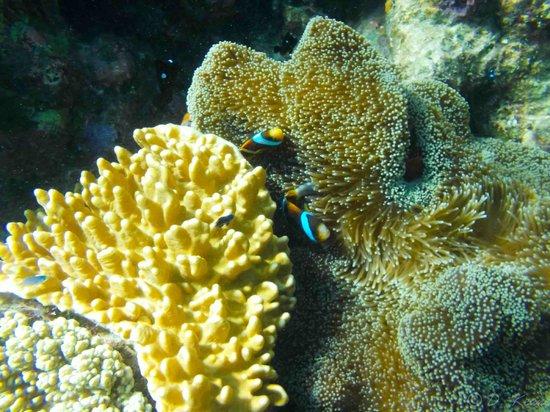 Reef Experience : Nemo