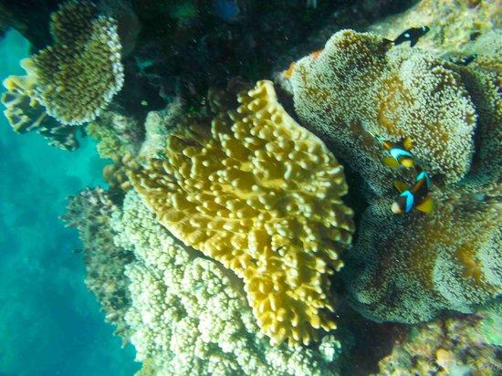 Reef Experience : reef