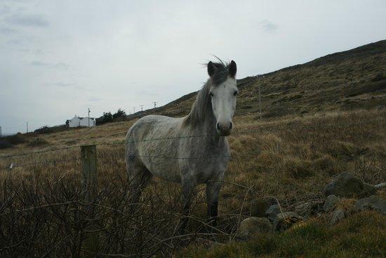 Clifden Bay Lodge: Le cheval du pré voisin